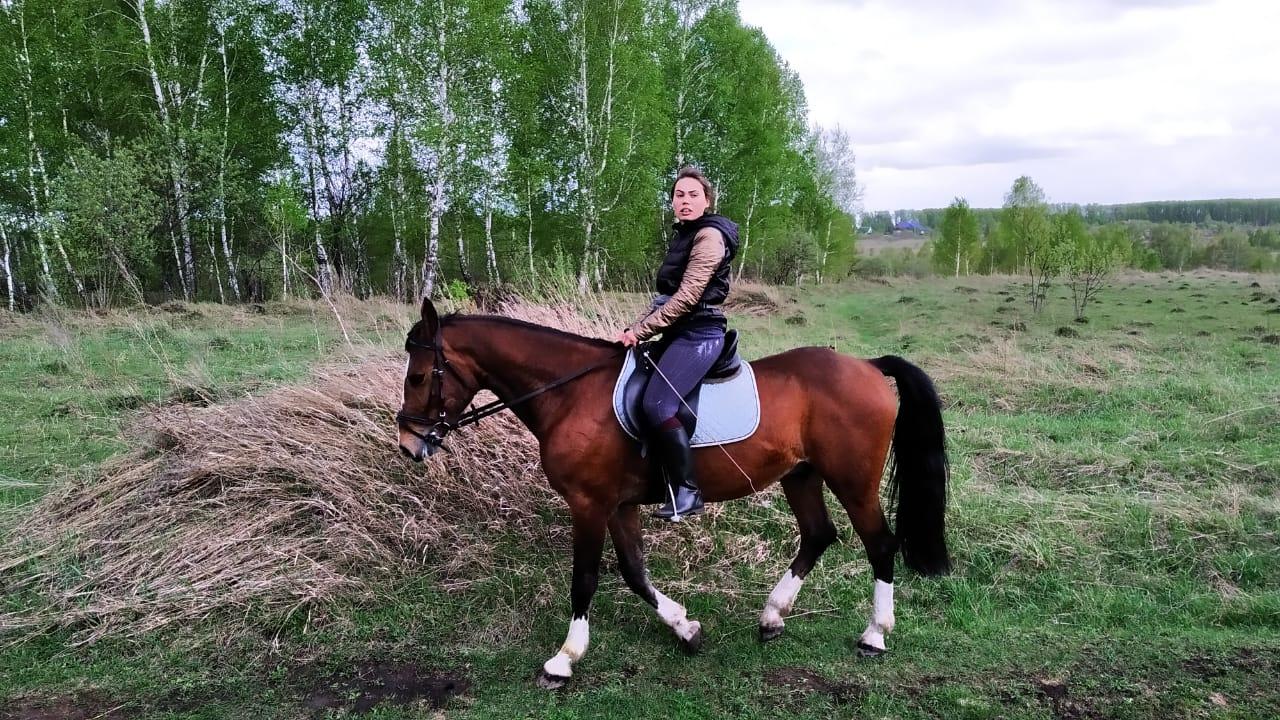 Конный Магазин Кемерово